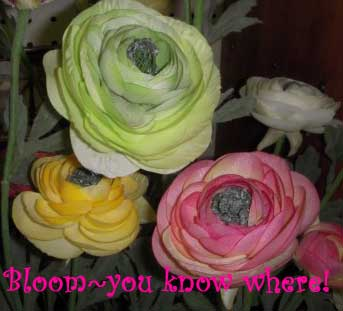 bloom-you-know-where1