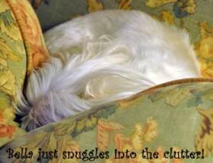 bella-snuggles-into-the-clu
