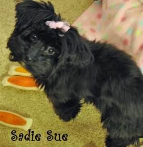 sadie-sue